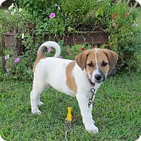 Adopt A Pet :: LIBBY - Hartford, CT