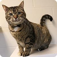 Adopt A Pet :: Katy - Council Bluffs, IA