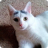 Adopt A Pet :: Kitty Boy (Smudge) - Greensburg, PA