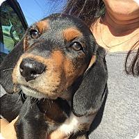 Adopt A Pet :: Elsa - Frozen Litter - Acworth, GA