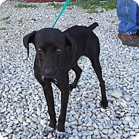 Adopt A Pet :: Onyx - Hagerstown, MD