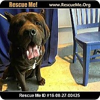 Adopt A Pet :: A498952 @ San Bernardino City - Beverly Hills, CA
