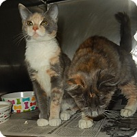 Adopt A Pet :: Sophie & Lucille - Newport, NC