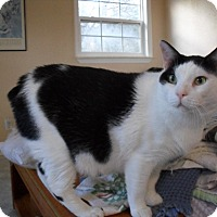 Adopt A Pet :: Murphy - Havana, FL