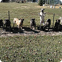 Adopt A Pet :: 3 females & 5 males - Denver, IN