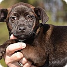 Adopt A Pet :: Spring
