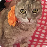 Adopt A Pet :: Opal - San Fernando Valley, CA
