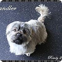 Adopt A Pet :: Chandler - Rockwall, TX