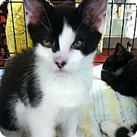 Adopt A Pet :: Antoine - Riverside, RI