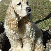 Adopt A Pet :: Princeton - Sugarland, TX
