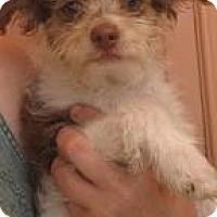 Adopt A Pet :: Gomez - Phoenix, AZ