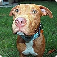 Adopt A Pet :: DJ - Orlando, FL