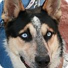 Adopt A Pet :: Floyd