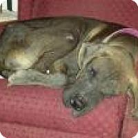 Adopt A Pet :: Beauregard - Phoenixville, PA