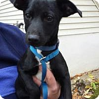 Adopt A Pet :: Baby Will - Marlton, NJ
