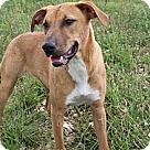 Adopt A Pet :: Megara