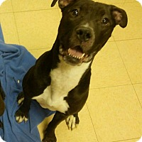Adopt A Pet :: Xena - Plainfield, IL