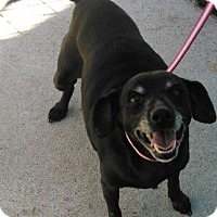 Adopt A Pet :: Cherry - Mount Carroll, IL