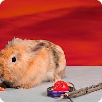 Adopt A Pet :: Zazu - Marietta, GA