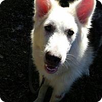 Adopt A Pet :: KO - Orlando, FL