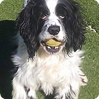 Adopt A Pet :: Dancer - Alpharetta, GA