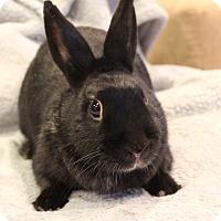 Adopt A Pet :: Coco - Hillside, NJ