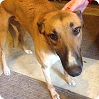 Adopt A Pet :: Will Smoke - Gerrardstown, WV