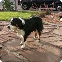Adopt A Pet :: Willow - Las Vegas, NV