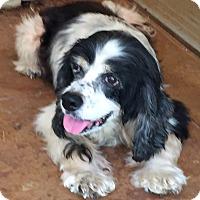 Adopt A Pet :: Dudley - Blanchard, OK