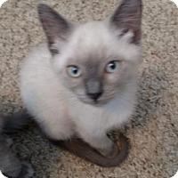 Adopt A Pet :: Jenna - San Jose, CA