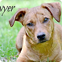 Labrador Retriever Mix Dog for adoption in Chester, Connecticut - Sawyer