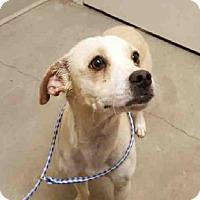 Adopt A Pet :: DANNY - Murray, UT