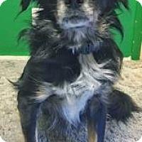 Adopt A Pet :: Bruno - Seahurst, WA