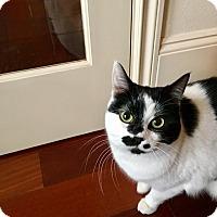 Adopt A Pet :: Poncho - Surrey, BC