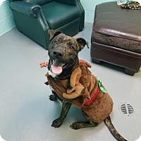 Adopt A Pet :: (Plot)Nick - Baltimore, MD