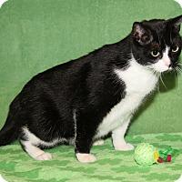 Adopt A Pet :: Millie (Spayed) - Marietta, OH
