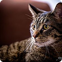 Adopt A Pet :: **Walter** - St. Louis, MO