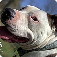 Adopt A Pet :: Uno - Southampton, PA