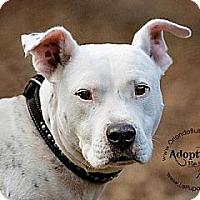 Adopt A Pet :: Ethan - Orlando, FL