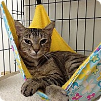 Adopt A Pet :: Missy - Monroe, GA
