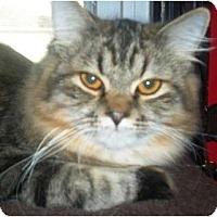 Adopt A Pet :: Goliath - Summerville, SC