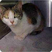 Adopt A Pet :: Nicky (SO) - Little Falls, NJ