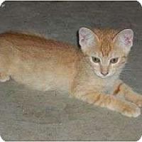Adopt A Pet :: Verbena Ballerina - McDonough, GA