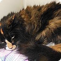 Adopt A Pet :: Sophie - N. Berwick, ME