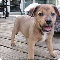 Adopt A Pet :: Heidi - Fort Lauderdale, FL