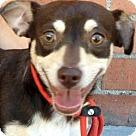 Adopt A Pet :: DAVE (video)