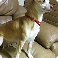 Adopt A Pet :: Starla - Meridian, ID