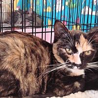 Adopt A Pet :: Tori M - Sacramento, CA