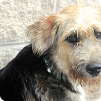 Adopt A Pet :: Avondale - Norwalk, CT