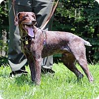 Adopt A Pet :: Abner (aka Jimmy) - Mount Gretna, PA